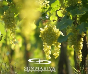 THE ADDED VALUE OF OUR  PROSECCO SUPERIORE IS SUSTAINABILITY